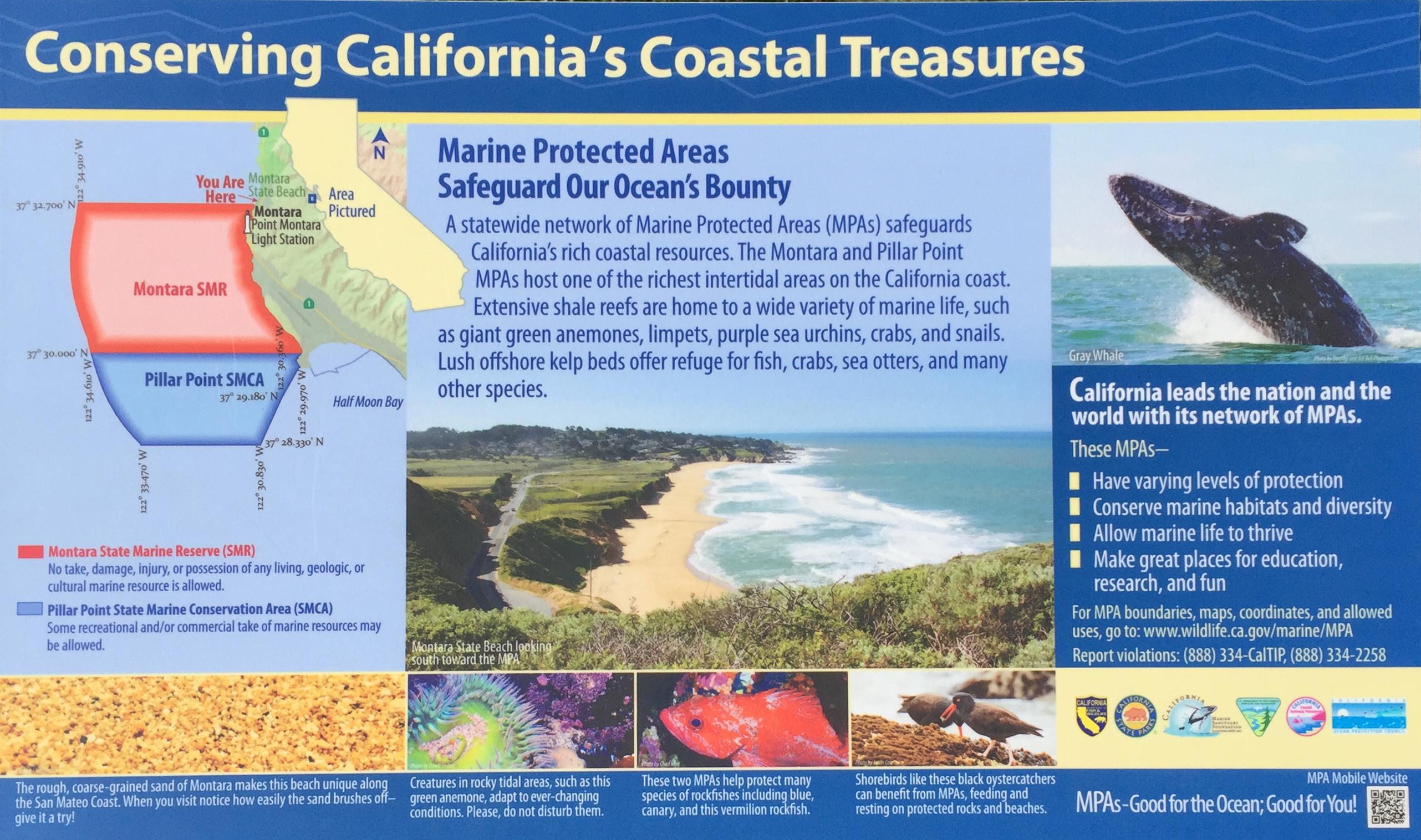 how can we protect marine life We can help to sustain marine biodiversity by using laws and economic incentives to protect species, setting aside marine reserves to protect ecosystems, and using community-based integrated coastal management.